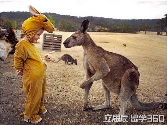 澳洲留学,澳洲做志愿者