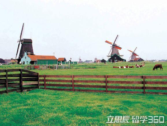荷兰农业专业的独特优势、你知道不!