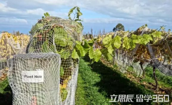 qile518留学 qile518林肯大学特色课程葡萄酒专业介绍