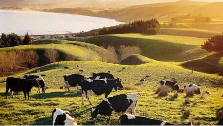 """请回答新西兰:学""""新农业"""",做""""新人才""""!"""