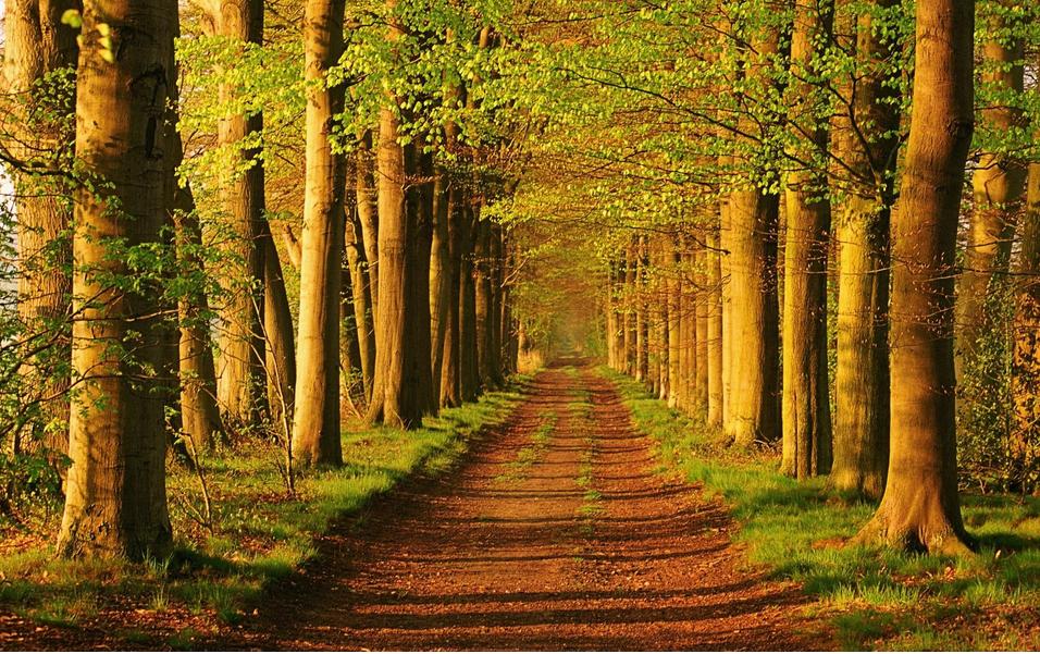 出国留学选择荷兰有哪些优势呢?