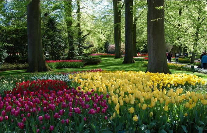 在荷兰留学的生活讲解