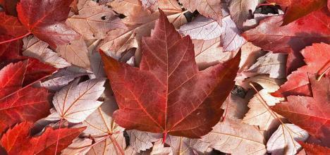 留学须知:教你正确解读加拿大安大略省高中成绩单