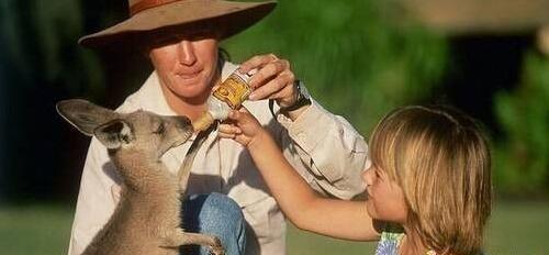 在澳洲生活,安全方面很重要