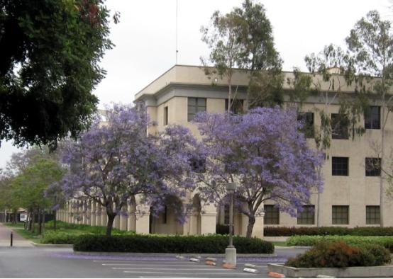 加州理工学院专业