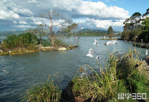 新西兰留学:新西兰硕士奖学金申请注意事项