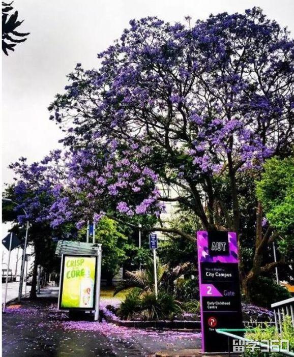新西兰旅游签证秘密