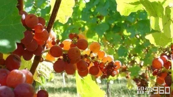 新西兰葡萄酒专业