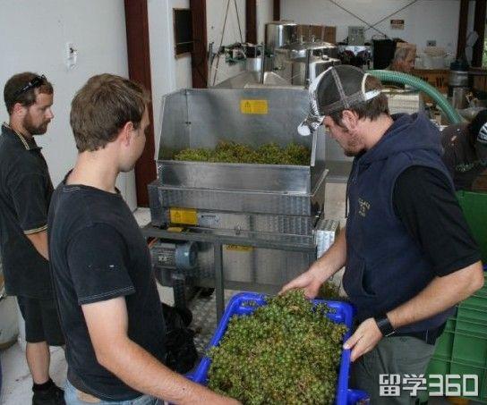 品红酒交友|新西兰东部理工学院葡萄酒酿制专业介绍