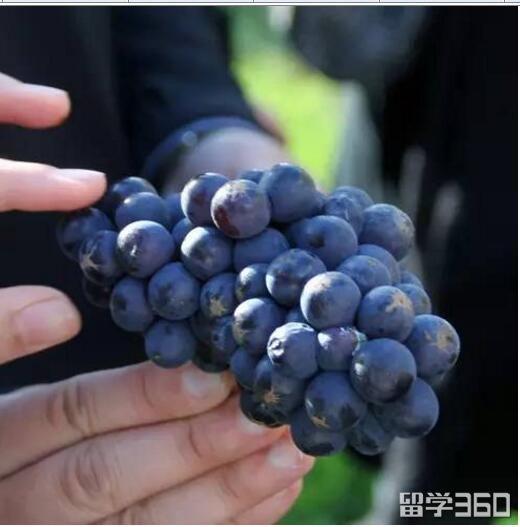 划重点|2018年qile518读葡萄酒专业来这些院校错不了!
