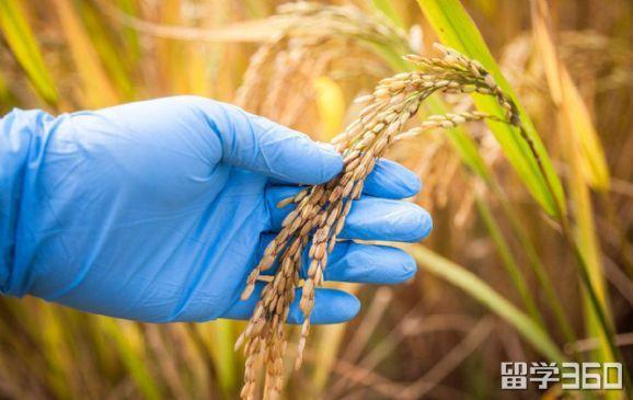 新西兰梅西大学农业科学专业