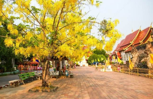 涨知识~ 你对于泰国的国花认知错误,是时候改正了!