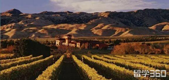 新西兰葡萄酒酿造专业