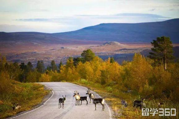 芬兰的最佳旅游季节