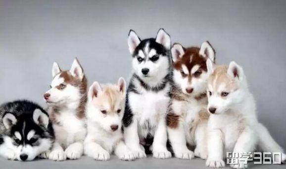 如何识别动物的种类
