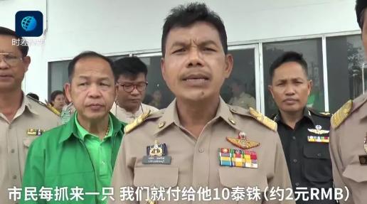 """泰国鸽子泛滥成灾,来自泰国的""""求助"""",可操碎了中国吃货的心。"""