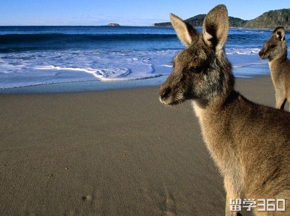 高考后去澳大利亚留学