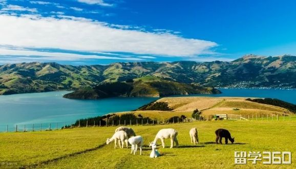 留学新西兰预科费用