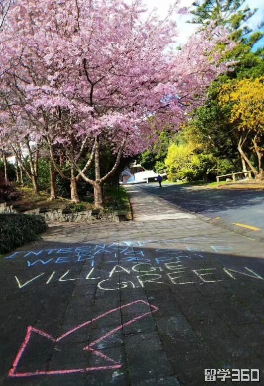 有国际日的分享!恭喜T同学怀卡托大学就读获签!