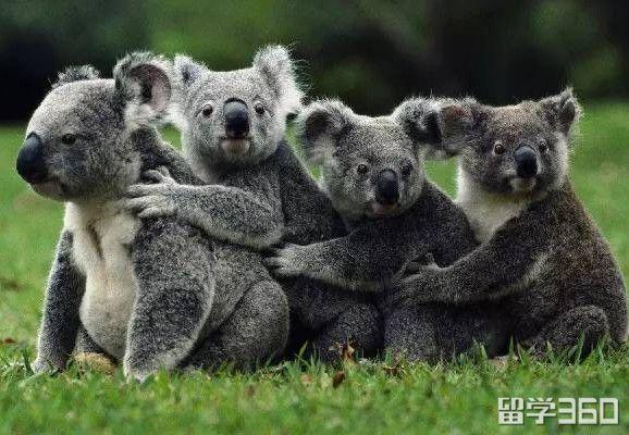 什么?去澳大利亚留学居然有那么多优势!