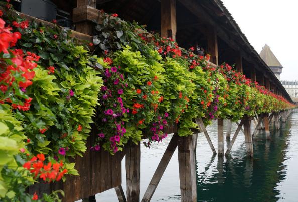 瑞士留学:语言,规划助你成功申请洛桑酒店管理学院