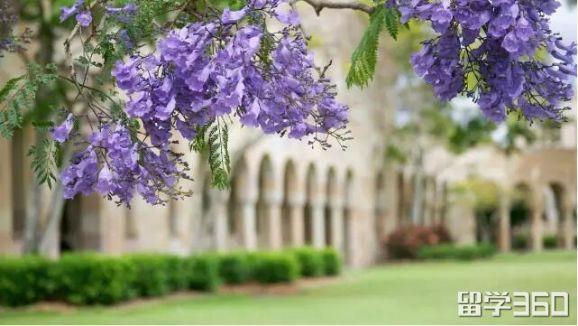 曲线救国本科转学成功申请到昆士兰大学