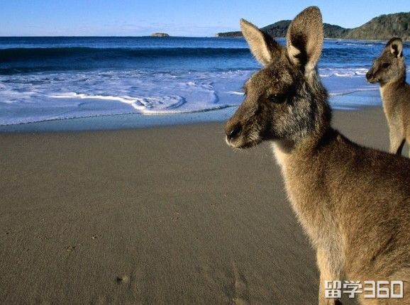 移民澳洲的十大理由