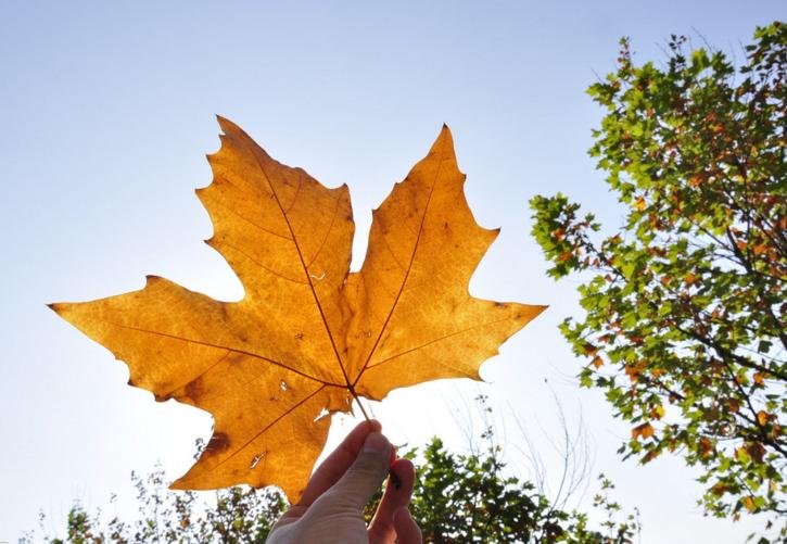 加拿大签证生物识别采集