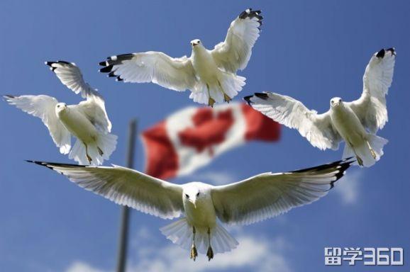 助你了解2019年加拿大留学政策有哪些新的变化