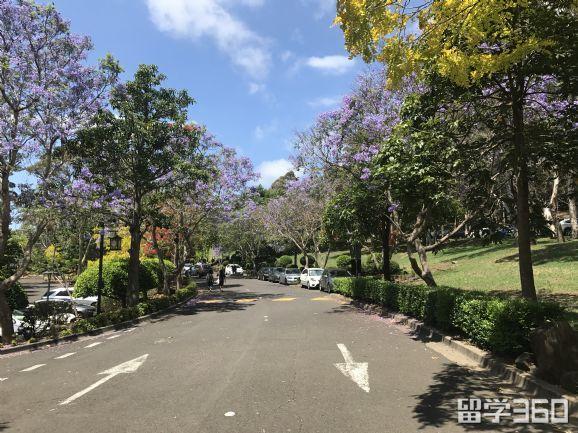 澳洲留学如何选择好学校?学校排名反映的真的是它的教学实力?