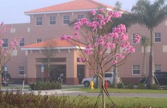 艾武玛里亚多纳序学院