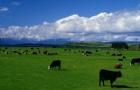 新西兰留学申请手续入学申请和留学签证申请介绍