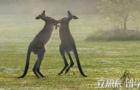澳大利亚留学怎样选专业?
