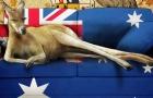澳洲技工移民新转机!无学历也能申请雇主担保!