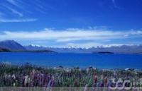新西兰海外留学生留在新西兰申请工作签证情况介绍