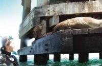 迪肯大学海洋生物专业――环境科学中的小清新学科