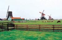 荷兰在农业方面的优势讲述