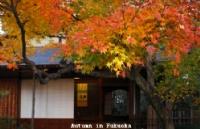 日本亚细亚日本语学院优势分析