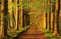 为什么要选择荷兰留学,去荷兰留学有哪些优势呢!