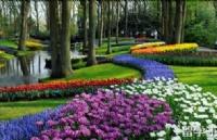 荷兰留学H类院校的相关信息说明