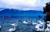 瑞士留学旅游管理专业入学条件分析