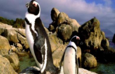 企鹅岛自然探索户外主题营+畅游东岸课堂体验14天