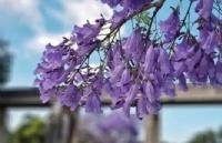 11月你还只知道去欣赏红叶?别把这浪漫的紫色世界给遗忘了!
