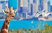 想单独去澳大利亚旅行的你,请收下这份小建议!