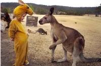 澳洲留学前需要做的6项功课!