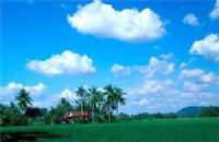 泰来大学商业专业奖学金与酒店管理专业奖学金