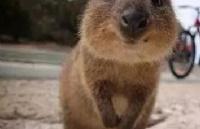 旅游攻略�虬拇罄�亚西澳所有好玩的都在这儿了