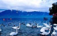 申请瑞士留学签证的全部流程都在这里