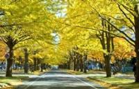 刘同学得知可以进入北海道大学后 激动不已