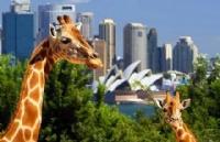 2018年澳洲第一批462打工度假签证正式开放!一生只有一次!!